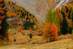 Splendid Isolation _MG_8672m(3) (maxo1965) Tags: autumn italy hiking herbst logcabin trentino dolomites valdifassa pozzadifassa valsannicol
