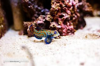 Aquarium Liegé