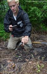 Zachary (Lotterhand) Tags: virginia king snake eastern copperhead