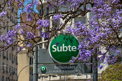 Subte Metro Station Behind Beautiful Jacaranda Blooms - Buenos Aires, Argentina (takasphoto.com) Tags: world southamerica argentina argentine america buenosaires earth ba americas argentinian bsas porteos southernhemisphere rodelaplata amricadelsur capitalfederal ciudadautnomadebuenosaires westernhemisphere           alphacity      theparisofamericas