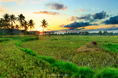 Shining Through (georgekb81) Tags: sunrise canon landscape rice philippines sto greens fields bicol domingo starburst blending albay 550d 1018mm