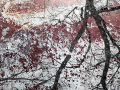 Dark Consciousness (Rossdxvx) Tags: trees plant abstract reflection tree art texture silhouette contrast rust shadows grim outdoor decay michigan surrealism lofi surreal overlay gritty textures overexposed grime minimalism dilapidation decaying dilapidated textured 2016