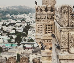 #fort #golconda #hyderbad #india #nikon (dipshekhardas) Tags: india nikon fort hyderbad golconda