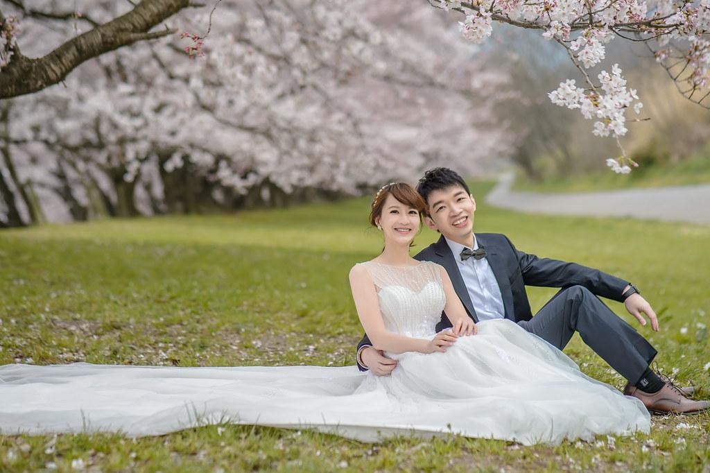 京都婚紗,櫻花拍攝,櫻花拍攝景點,如何拍攝櫻花,海外婚紗拍攝,京都櫻花婚紗,山科疏水,油菜花櫻花,櫻花油菜花