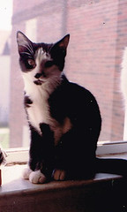Ling Ling (kevin63) Tags: window cat panda apartment jester tuxedo thirdfloor lightner lingling