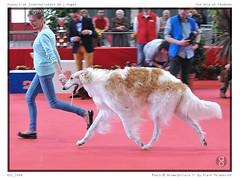 DSC_7446 (animalpicture.fr) Tags: de nikon canine exposition internationale centrale limoges d300 2016