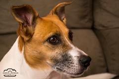 Clarice (Bela Putriche Fotografia) Tags: family dog love co animal familia cat amor gato cachorro cachorros bichos animais filhos filhote babycat cani adoo adote nocompreadote