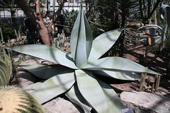 IMG_2453 (Mercar) Tags: canada garden botanical montreal jardin greenhouse botanic botaanikaaed qubeck
