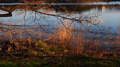 Evening light (mpersson60) Tags: sea spring sweden sverige solna hav vr brunnsviken
