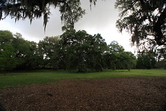 Canon206503 (godrudy6661) Tags: neworleans audubonpark treeoflife oaktrees