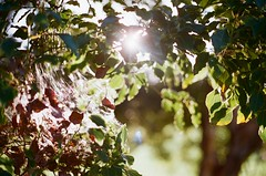 (rebecaarh) Tags: film nature 35mm canonae1 agfavista400