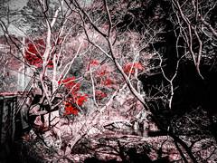 Shashin - DSCN2809 (Mathieu Perron) Tags: life city bridge people bw white black monochrome japan nikon noir perron daily nb journey  mp blanc japon personne ville gens vie mathieu   sjour   quotidienne      p520  zheld