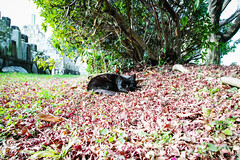 Today's Cat@2016-01-08 (masatsu) Tags: cat sigma cc100 catspotting thebiggestgroupwithonlycats dp0quattro