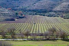 Tractor (DarioMarulli) Tags: tractor nature nikon wine natura vino vite abruzzo laquila trattore vigna d3200 colture nikonclubit