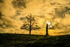 Trees at sunset (Adrian Costigan.) Tags: trees ireland winter light red sky irish sun sunlight nature beautiful silhouette clouds rural canon landscape eos countryside scenery sundown outdoor scenic carton kildare
