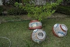 Nathaniel Moseley-20140207-20140207-_DSC0652-Vientiane Wander One-Vientiane Wander One (FinalDoom) Tags: grass hose pots laos bushes vientiane vientianecapital