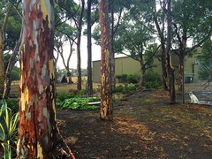 Outback Backyard (Seb Ian) Tags: melbourne gumtree diggersrest