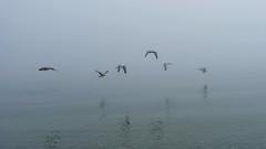 Ostsee (WeltFarben) Tags: ocean seagulls fog meer nebel möwen