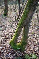 (Birgit Speulman) Tags: wood color tree boom