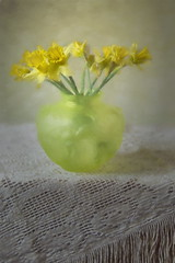 Spring in a Vase (suzanne~) Tags: stilllife painterly blur flower texture floral yellow soft indoor daffodil vase tabletop topazimpression