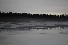Kent's Pond (Tracy Christina) Tags: trees winter canada reflection ice fog newfoundland grey pond stjohns february