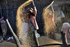 Etiopia: la pulitura del grano (Amedeo Cristino) Tags: voyage africa travel donne afrika ethiopia paesaggi viaggio nourriture cibo controluce vento afrique grano etiopia ethiopie cereali
