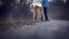 2016-02-12_17-59-40 (torstenbehrens) Tags: dof bokeh panasonic hund frau 45mm hagel schauer berrascht 18 dmcg1