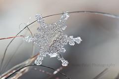 IMG_8531 (nitinpatel2) Tags: snowflakes patel nitin