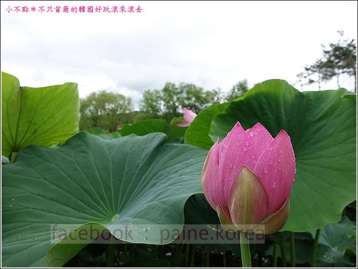 京畿道 兩水頭 洗美苑 (107).JPG