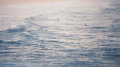 Curl Curl surfers (Halans) Tags: sea sunrise waves surfing surfers curlcurl fav16