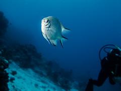 IMG_0689 (eye[4]eye) Tags: egypt diving gypten tauchen bluewaves