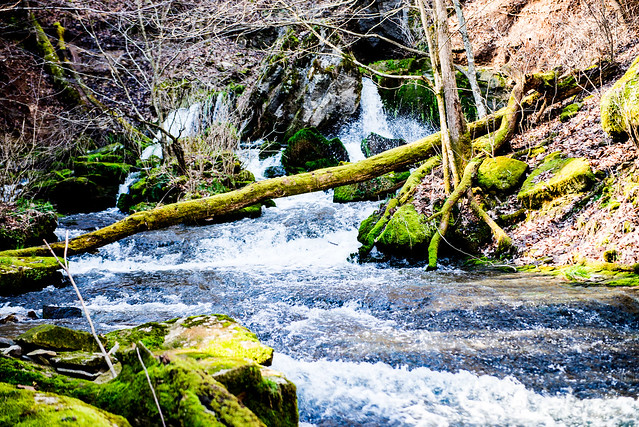 Cave River Valley Natural Area - March 18, 2016