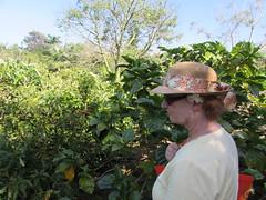 Judy, Princeville Botanical Gardens (popea53) Tags: hawaii kauai princeville