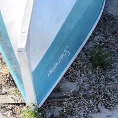 Shearwater. #beachlife #fleurieucoast #fleurieucoastmadebynature #fleurieupeninsula #southaustralianbeaches #southaustralia #australiagram #beachstyle