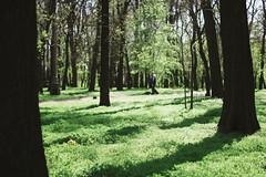 Park (Frostroomhead) Tags: park trees tree green art nature nikon f14 sigma bark 30mm d5200