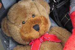 Florence's Teddy Bear 160226-165335 C4e (Wambeke & Wambeke Photography, Art, & Textiles) Tags: redribbon teddybear stuffedanimal charliewambekephotography wambekeandwambekephoto canonsx50photograph wambekewambekephotographyarttextiles florencesteddybear