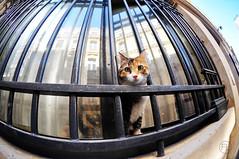 tit minou (c'estlavie!) Tags: street paris france animal cat chat flickr