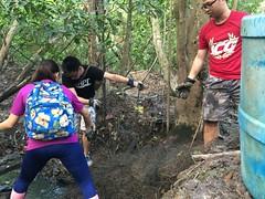 32-Env&CivSoc-World-Water-Day-LCK-Cleanup-26Mar16 (Habitatnews) Tags: mangrove capt nus worldwaterday limchukang iccs