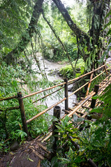 (kuuan) Tags: bridge bali forest river rainforest bamboo mf manualfocus 15mm voigtlnder heliar superwideheliar aspherical gobleg f4515mm voigtlnderquot