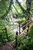 (kuuan) Tags: bridge bali forest river rainforest bamboo mf manualfocus 15mm voigtländer heliar superwideheliar aspherical gobleg f4515mm voigtländerquot
