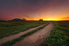 Road to the Sun (David Colombo Photography) Tags: california road sunset red sky orange mountain color tree green nature field grass clouds landscape oak nikon sandiego outdoor path vibrant hill explore ramona grasslands 44 goldenhour d800 leadinglines explored davidcolombo davidcolombophotography