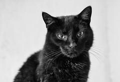 _F012728swc (b.kunst17) Tags: bw pet cats pets white black animal animals cat 50mm tiere nikon sw katze katzen haustier schwarz kater tier haustiere weis d3s