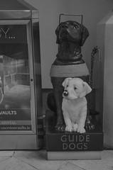Guide Dogs (seamusruizearle) Tags: county ireland dublin irish college trinitycollege trinity select kildare countykildare