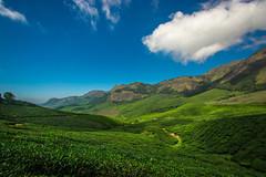 Tea estates of Munnar ([s e l v i n]) Tags: india green tea kerala greenery munnar teaestate greenearth keralatourism keralatravel picturesofkerala selvin
