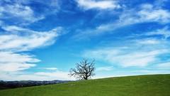 A lonely tree (harminder dhesi photography) Tags: california park sky tree green nature landscape outdoors oak hiking sonoma bayarea sonomacounty norcal oaktree s2 vsco snapseed vscocam