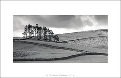 Fields of View (Mike Palmer Fauxtography. OFF) Tags: trees bw monochrome field stone canon landscape eos mono is dry cumbria 7d walls usm ef28135mm garrigill f3556 michaelpalmer
