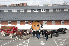 Budweiser Clydesdales (3d U.S. Infantry Regiment (The Old Guard)) Tags: budweiser