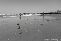 Rose on the beach (binzhongli) Tags: rose sandiego pacificbeach selectivecoloring canon6d