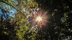 IMG_1282810 (Uday Pratti) Tags: seattle summer redmond sammamish lakesammamish idylwoodpark