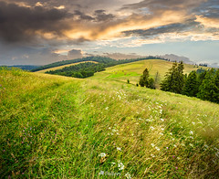 large meadow with herbs, trees in mountain area-150726 (M. Pellinni) Tags: travel summer sky cloud mountain tree green nature beautiful beauty field grass weather forest landscape countryside spring scenery view outdoor country hill meadow peak scene valley environment serene spruce tranquil slope dropbox clearing conifer ifttt